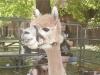 petting-zoo_2